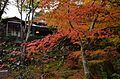 Autumn foliage 2012 (8253621222).jpg