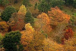 Northland, Wellington - Northland overlooks Wellington's Botanic Garden