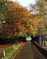 Autumnal Ivy Lane - geograph.org.uk - 1029518.jpg