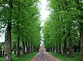 Avenue of lime trees, Carlisle Cemetery - geograph.org.uk - 902686.jpg