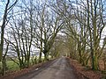 Avenue of trees on the road to Kershope - geograph.org.uk - 687990.jpg