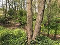 Bach im Wald.jpg