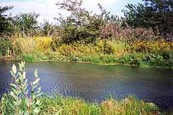 Baker wetlands.jpg