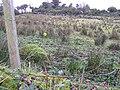 Ballygowan Townland - geograph.org.uk - 78942.jpg