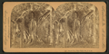 Banyan tree, Palm Beach, Florida, from Robert N. Dennis collection of stereoscopic views 2.png