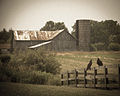 Barn with Turkey Vultures.jpg