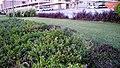 Barwa City, Abu Hamour - panoramio (9).jpg