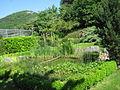Bassin de jardin 0004.jpg