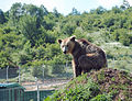 Bear sanctuary Prishtina 2.jpg