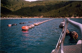 Pelorus Sound - A vessel moored up against a mussel long line