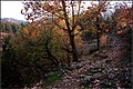 Beautiful Fall Scene Around Bereketler Area In Denizli (52818582).jpeg