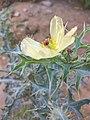 Beauty of wild flower.jpg