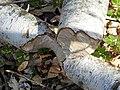 BeaverHaidSaalfelden 08.jpg