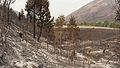 Beaver Creek Fire 2013 Idaho 7.jpg