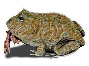 Beelzebufo ampinga, im Maul ein kleiner, gefiederter Dinosaurier (künstlerische Rekonstruktion)