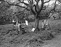 Beemster in bloei, Bestanddeelnr 902-1597.jpg