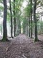 Beukenlaan Zandheuvel (31113258015).jpg
