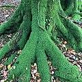 Bickham Wood MRD.jpg