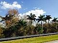 Big Cypress, FL, USA - panoramio (1).jpg