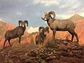 Bighorn Sheep, Denver Museum of Nature and Science.jpg