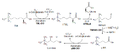 Biosíntesis de la carnitina en mamíferos.png