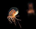 Birch Aquarium3.jpg