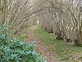 Birch Copse - geograph.org.uk - 2304963.jpg