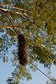 Birds nest 7.jpg