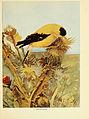 Birds of lakeside and prairie (6257517362).jpg