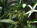 Bizarres orchidées.jpg
