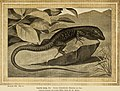 Blätter für Aquarien- und Terrarien-Kunde (1902) (20386374935).jpg