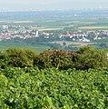 Blick in den Oberrheingraben - panoramio (1).jpg