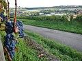 Blick von den Weinbergen in das Enztal - panoramio.jpg