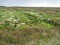 Bog on Plenmeller Common - geograph.org.uk - 452198.jpg