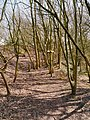 Bollin Valley Way at Watch Hill Castle, Cheshire - geograph-3418070.jpg