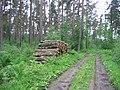 Bolton Muir Wood. - geograph.org.uk - 18378.jpg