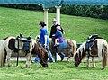 Bondi, 14 - Shetland pony rides - Bondi, 2011.jpg