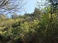 Bosco della Camagiura - panoramio.jpg