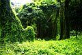 Bosque de La Habana 11.jpg