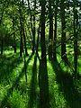 Bosque de Tudela.jpg