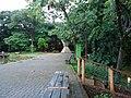 Bosque dos Buritis - panoramio (3).jpg