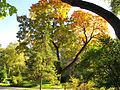 Botanička bašta Jevremovac, Beograd - jesenje boje, svetlost i senke 08.jpg