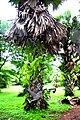 Botanic garden limbe110.jpg