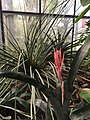 Botanische tuinen Utrecht 43.jpg