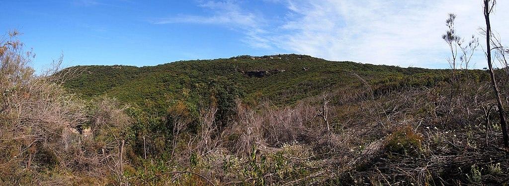 Bouddi National Park - panoramio (2)