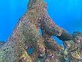 Branching live rock Aquarium of the Pacific.jpg