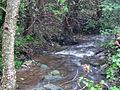 Bresnička reka 1.JPG