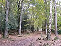 Bridleway through Millersford Copse, New Forest - geograph.org.uk - 277049.jpg