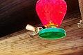 Broad-tailed Hummingbird in Colorado Springs.jpg