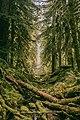 Broken Log Path (Unsplash).jpg